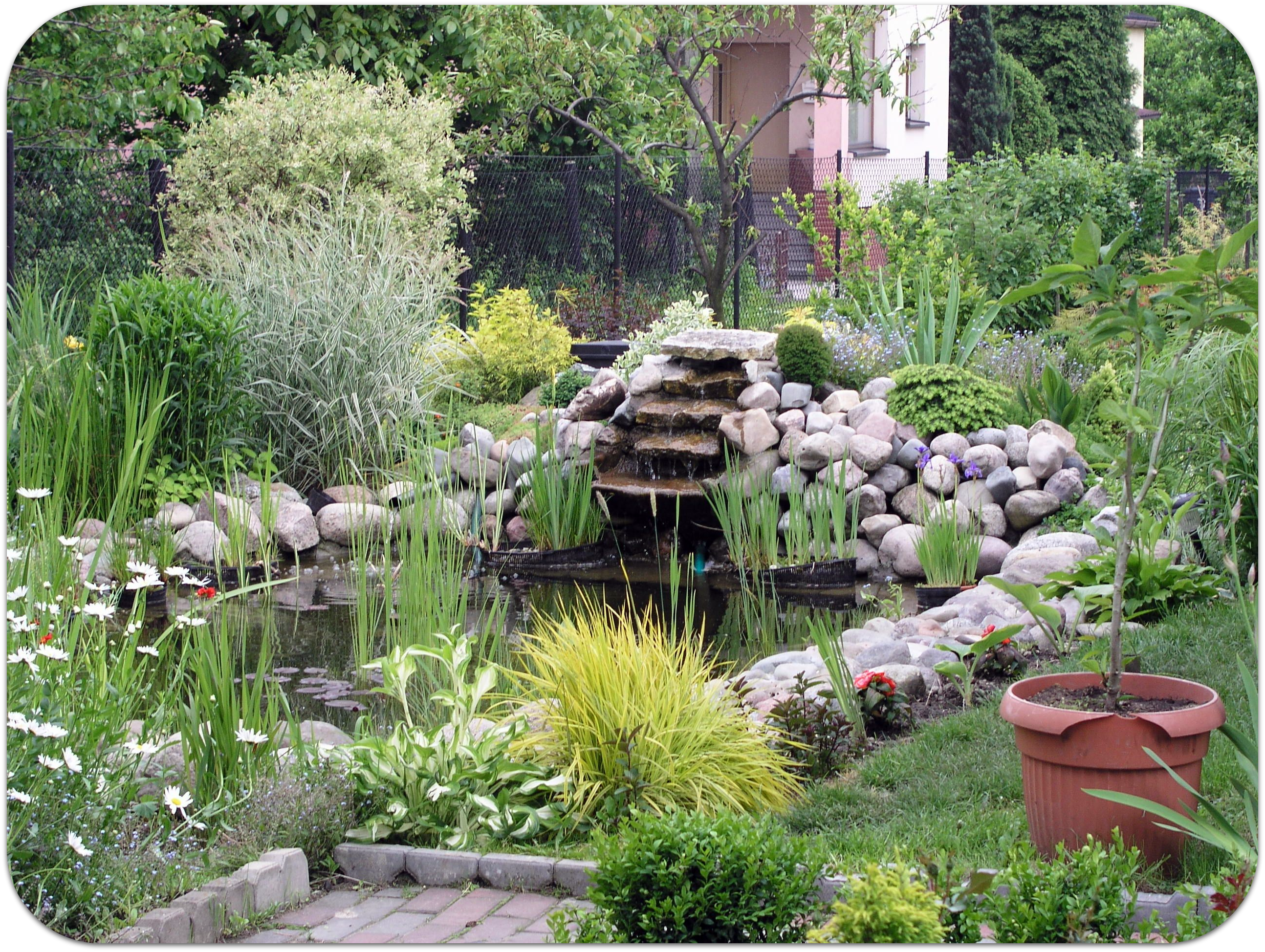 Services for Garden pond installers